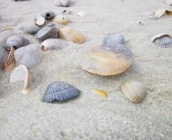 shell-602226_640