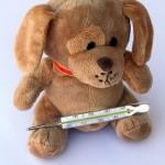 teddy-242862_640
