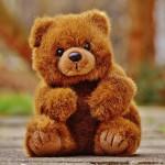 bear-1236264_640