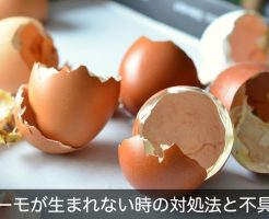 egg-shells-706502_1280